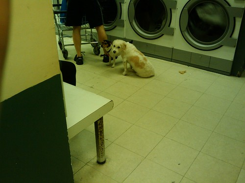 Pups-in-the-laundromat
