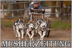 Schlittenhunde im Tierpark Ströhen