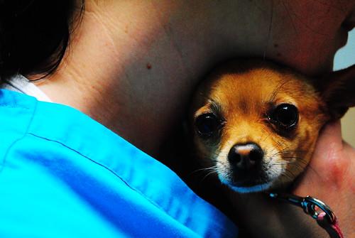 chihuahua! SOOC by FreddyJ99