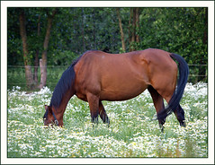 Ask me to show you poetry in motion, and I will show you a horse (Jan Gee) Tags: flowers horse fleurs caballo cheval blumen wei pferd bloemen paard