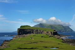 IMG_2041 Gshlmur og verar  Klvanesi (Jgvan Horn) Tags: green nature grass clouds island islands coast sheep outdoor north bluesky atlantic rams ram faroeislands faroe fr faroes mykines froyar grs frerne seyur tindhlmur gshlmur verar tindholm