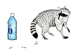 smart water raccoon (stuffedanimalbrigadier) Tags: barcelona madrid usa streetart money berlin bird art love water smart train cat germany mouse happy deutschland graffiti louis pig football ecuador corn stencil rat mask god you steel kunst flag reserve monk blingbling weltmeisterschaft mcdonalds deer urbanart potato starbucks monet fox meal oil antelope impressionism plus crow bling raccoon bomb alster der stencilart vuitton korn hermannplatz aldi happymeal otavalo inkas smartwater washbear teufel trink