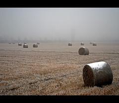 Ice ........ ice again (alfvet) Tags: ice fog nikon campagna nebbia vigevano d60 abigfave veterinarifotografi ourmasterpieces reflectyourworld