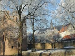 Toren en kerk in Heusden (ditmaliepaard) Tags: trees tower church bomen frost toren kerk brabant heusden rijp