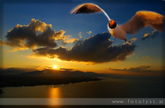 fly with me to the end of the world ... :-) (G.Hotz Photography (busy as a bee =)) Tags: sunset portrait people food lake bird photography austria dornbirn feldkirch sterreich stillleben foto fotograf fotografie hard bregenz gerald photograph bodensee constance bludenz constanze oesterreich vorarlberg produkt hotz hochzeitsfotograf anawesomeshot ondarena fotolyst