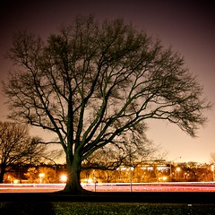 Nature's Fractals (Samer Farha) Tags: iwojima arlingtonva tree motionblur longexposure night lights dcist
