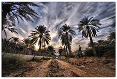 HDR-Between the palm   (A.Alwosaibie) Tags: sky cloud angel landscape photo nikon shot wide palm explore through ksa d60 sigma1020mm alhasa      alahsa goldstaraward  halilah hdrbetween