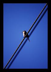 Still Standing (maraculio) Tags: travel blue inspiration bird art its standing fun photography israel still god east friday ge houghton tgif tone praise i pgif maraculio