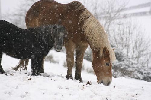 snowpony2