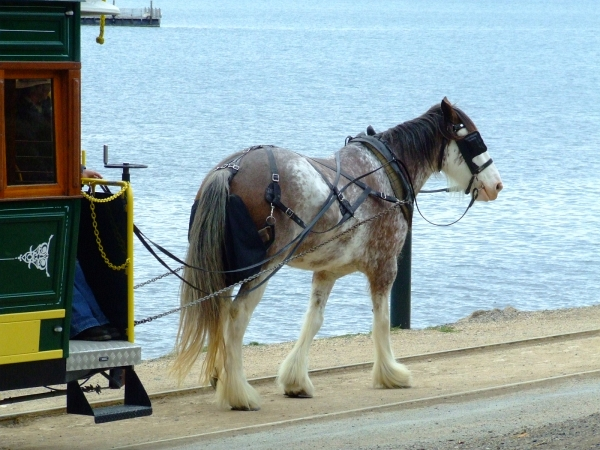 big horse 01