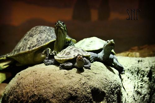 . turtles .