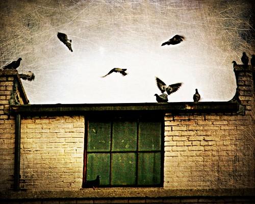 flint birds
