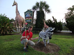 Pete adores this fake zebra