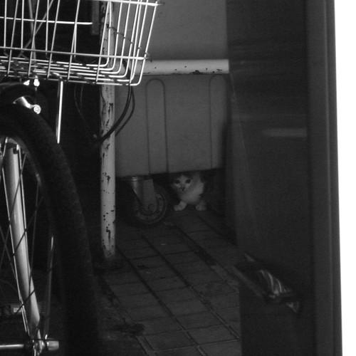 Today's Cat@20090908