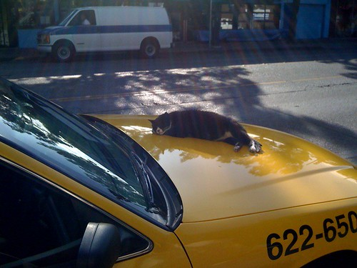 Cat taking a snooze on a cab, broadway cap hill