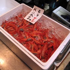 Shrimp, Tsukiji Fish Market