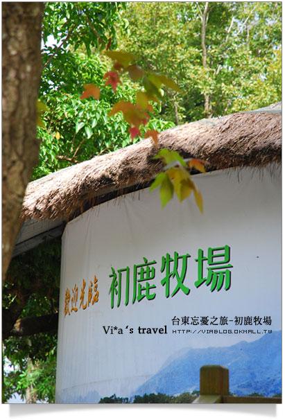 台東旅遊景點-初鹿牧場