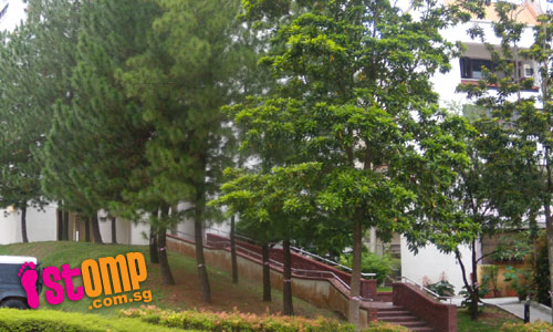 Green City? But 9 trees to be felled just for covered walkway and porch