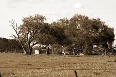 Trees and car wrecks (digital_science) Tags: car farm wreck tress