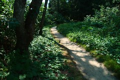 At Your Side (Floating Imitations) Tags: trees light green nature shadows path dmclx3