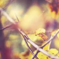 (Kjers..) Tags: pink autumn tree fall nature leaves yellow leaf branch canonef50mmf18 explore canoneos450d