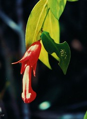 .Malaysia (A.t.h.) Tags: flowers malaysia tamannegara florafauna