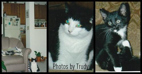 Trudy Surprise 2