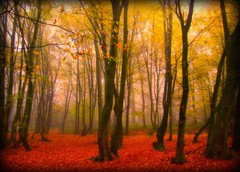 bei Oberbantenberg - magical autumn (NPPhotographie) Tags: wood autumn mist tree fall nature fog forest woodland germany magic creative dust oberberg mystic orton abigfave platinumphoto topofthefog theunforgettablepictures artofimages magicautumn bestcaptureaoi