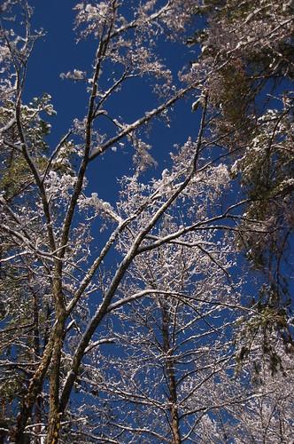 Snow Day '09 160