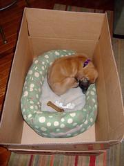 Sleeping in a box