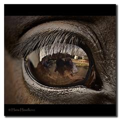 El gran ojo (HanaHoudkova) Tags: horse macro eye caballo ojo makro soe oko naturesfinest macrolicious bej fineartphotos mywinners anawesomeshot flickraward kobyla theunforgettablepictures naturewatcher themacrogroup theperfectphotographer goldstaraward ahqmacro multimegashot sensationalphoto
