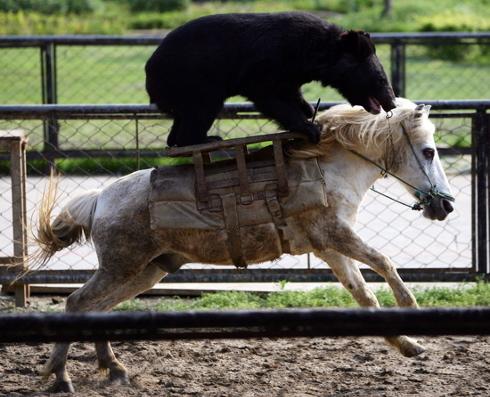 Bear Horse