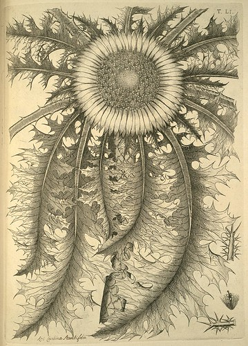 Allioni, Carlo (1785) Flora pedemontana. excudebat Ionnes Michael Briolus. (SICD)