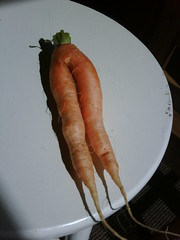 Check out my carrot