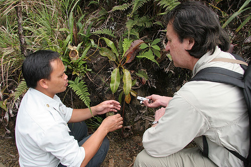 Discussing Nepenthes