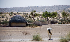 Where the streets have no name (Ali_Rizvi) Tags: pakistan horse nikon hut sindh thar d80 nangar parkar