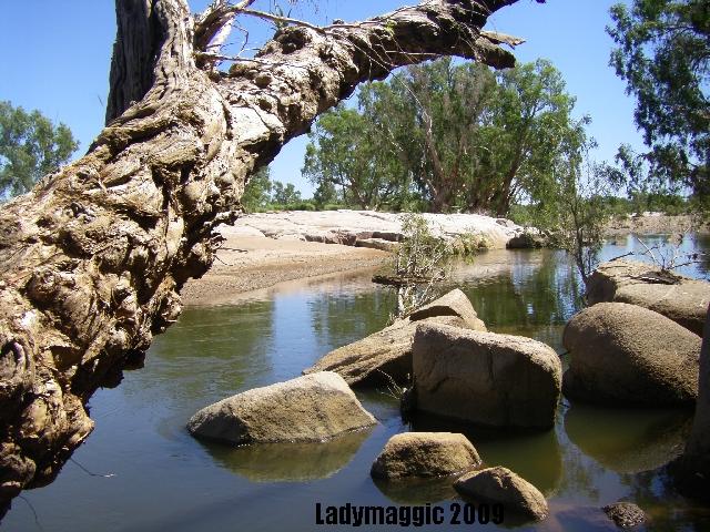 through the river gum