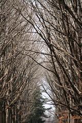 Allee (randombeauty) Tags: forest allee brynathyn pennypacktrust