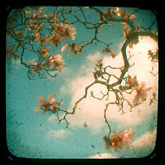 (_cassia_) Tags: pink flowers blue tree shop clouds vintage spring forsale magnolia etsy dust imperfection ttv throughtheviewfinder cassiabeck cassiabeckcom