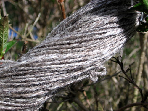 FirstWheelSpun_BFL_Apr09_1