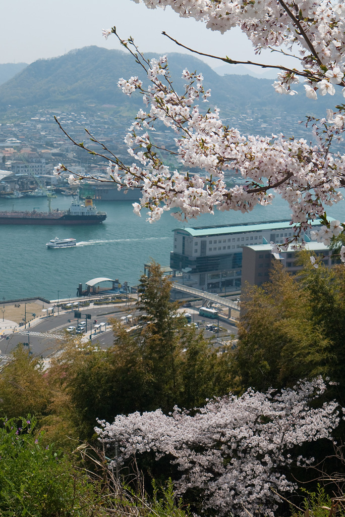 Cherry blossoms @Onomichi 3