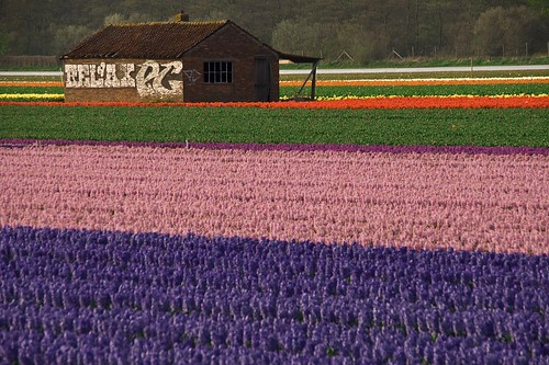Dutch Flowers by Marc Veraart, on Flickr