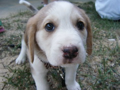 PUPPY! by _jennieMarie, on Flickr