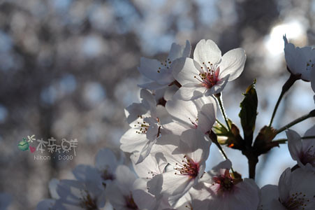 透亮的花瓣