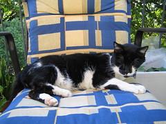 domino (ruthug08(on and off)) Tags: cats chats gatos katzen kediler