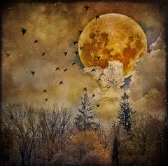 Magical (mbgrigby) Tags: trees moon texture birds clouds magical justforfun imagepoetry mbgrigby texturebykzappaster texturebyskeletalmess witchesmoonbyrostock