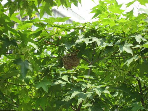 2009.05.11 鳥兒、巢兒、樹兒