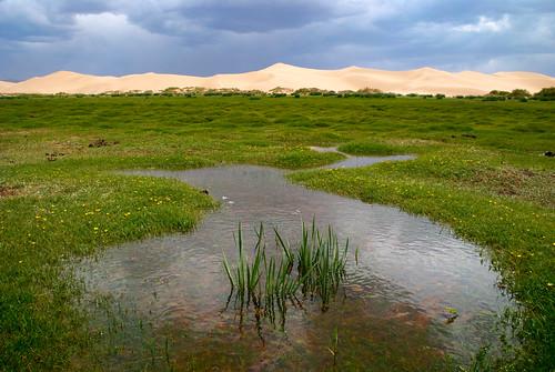 Gobi Desert 31