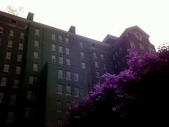 a shade of purple (explore the ruins) Tags: abandoned urbanexploring kingsparkpsychiatriccenter urbandecaykingsparkpsychiatriccenterurbanexploringabandonedurbandecay