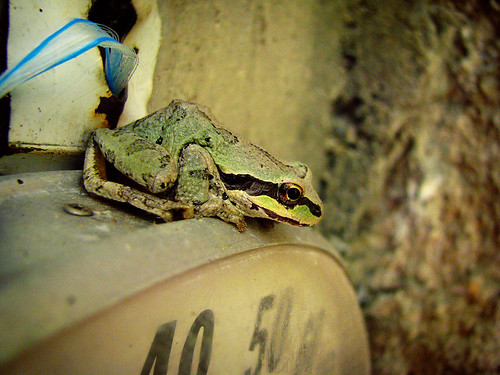 070209 frog 1